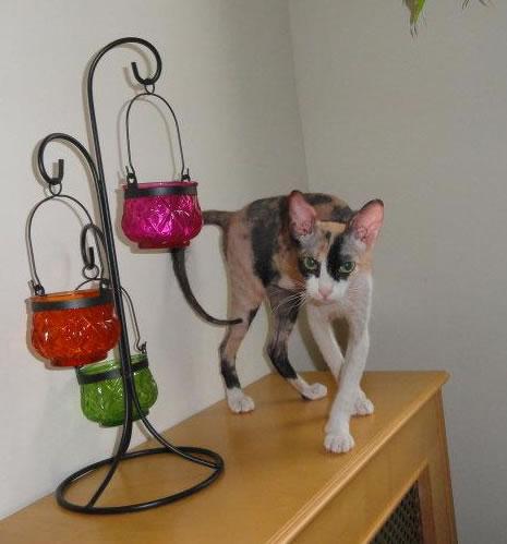Promotion NY cat - cat02