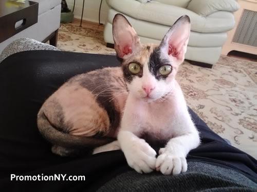 Promotion NY Cat 03